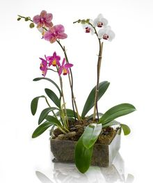 Contemporary Garden of Beautiful Orchids